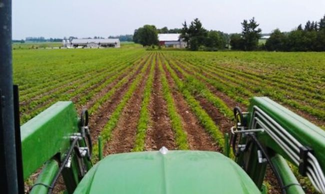 Weeding an organic bean field near Woodstock, Ontario. Spring 2013. Organicfarm Organicfarming Johndeere Tractorporn Tractor Biggreentractor Farm Life Farming Tending To Crops FarmPhotography Farmporn Farm Crops Green