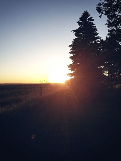 Love this ... Photography Nature_collection Natureporn Sunset Pinetrees Sunglare Sopretty Likefire Farmlife Saskatchewan