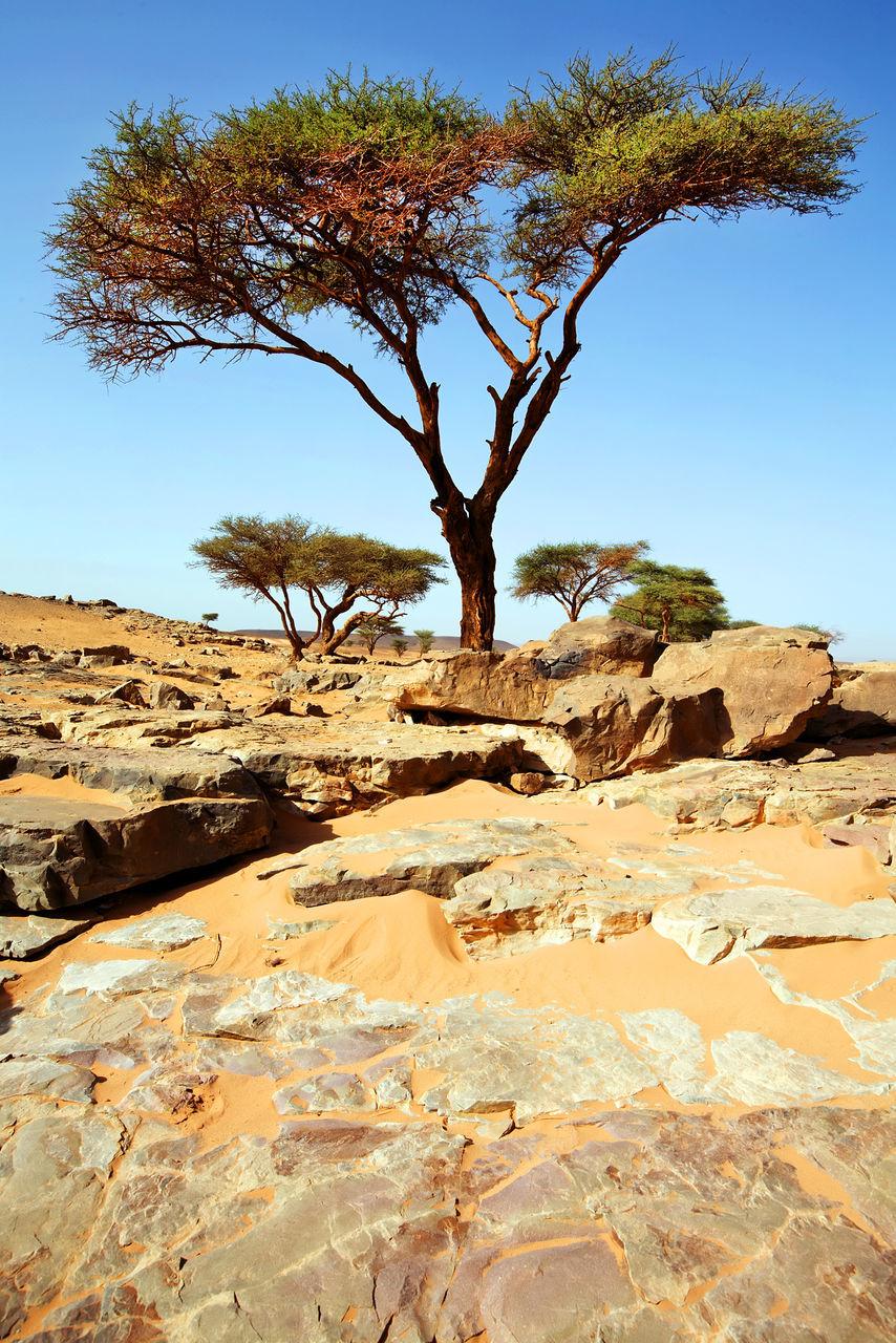 View Of Tree In Desert
