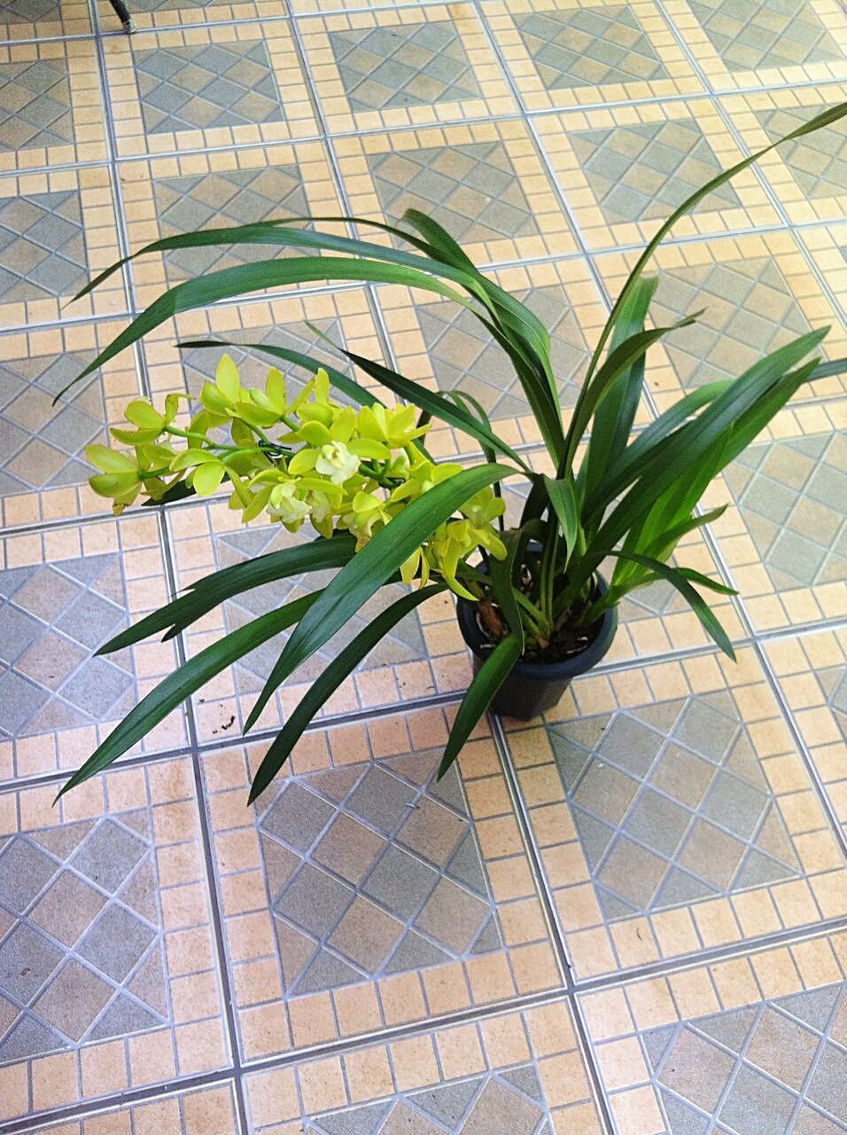 plant, green color, tiled floor, growth, no people, flower, leaf, day, nature, outdoors, beauty in nature, freshness, architecture, greenhouse, close-up