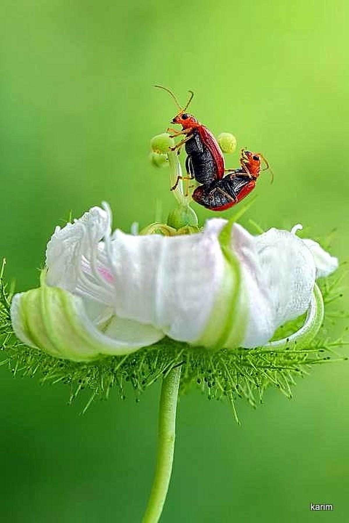 Ladybug Macro Photography Insect Photography EyeEm Nature Lover