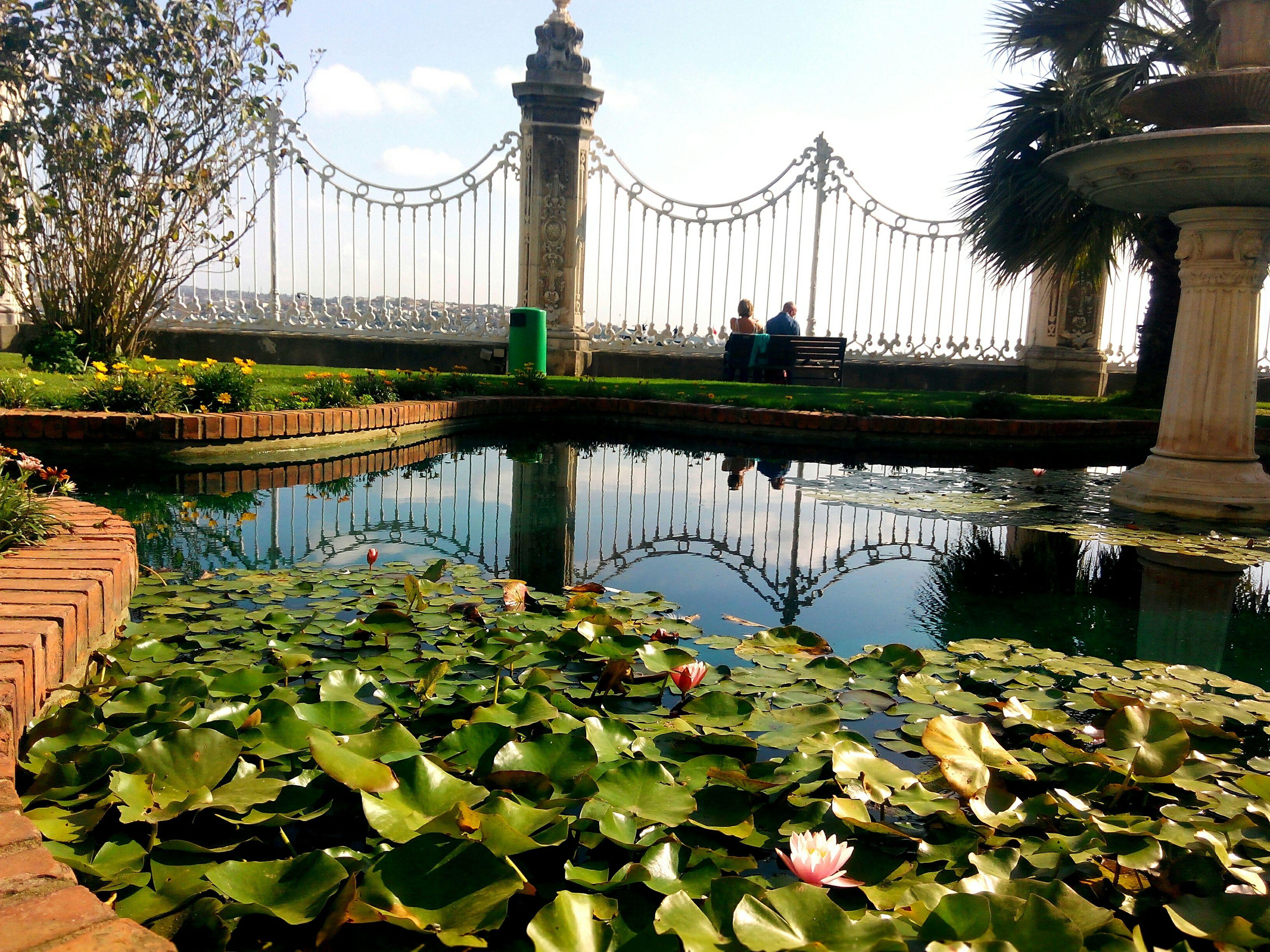 GardenNimphea Lotus Pool Nilüfer HavuzDolmabahceSarayı Sucu Yansıma Reflection