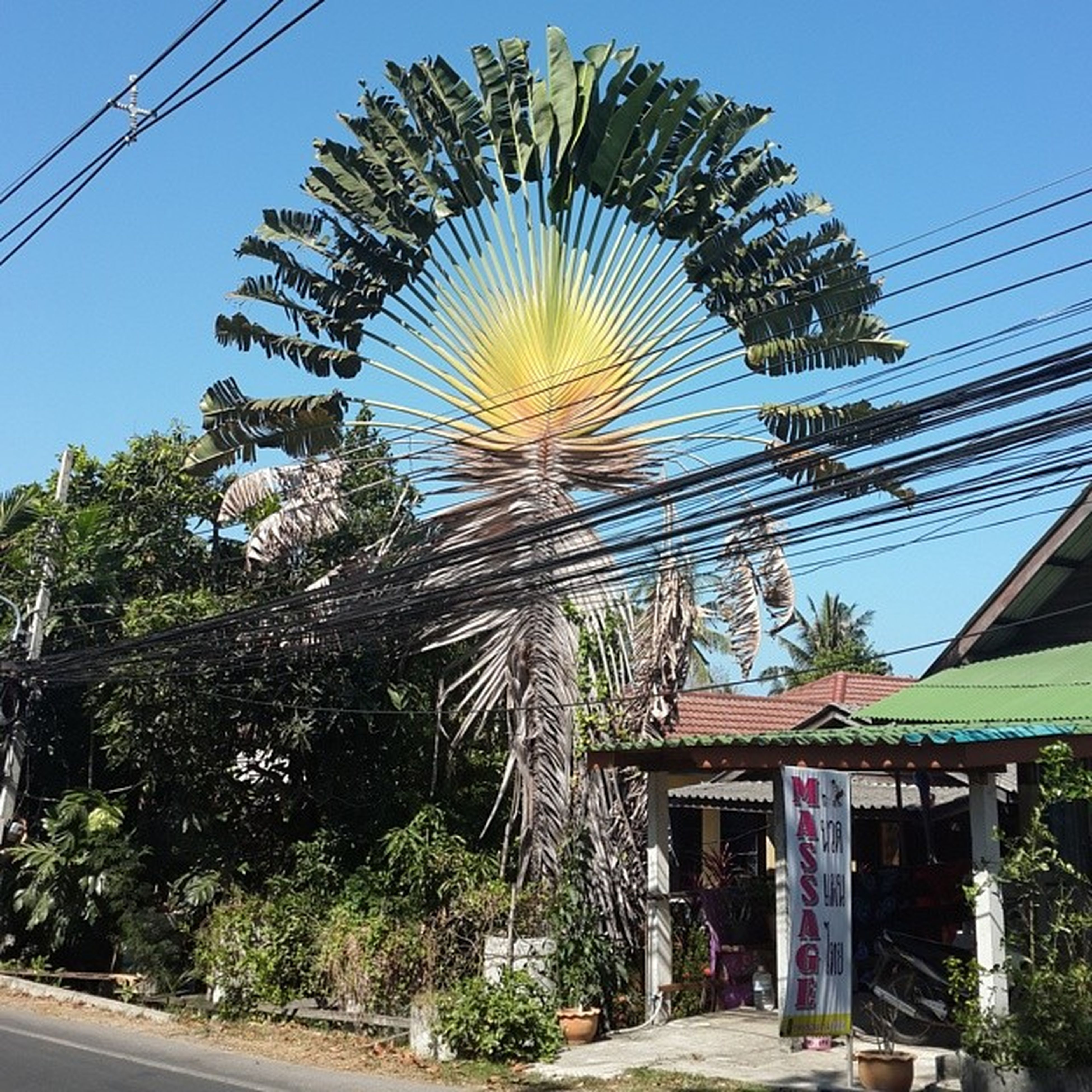 architecture, built structure, tree, low angle view, building exterior, blue, power line, sky, clear sky, growth, house, palm tree, day, cable, outdoors, plant, no people, electricity pylon, road, sunlight