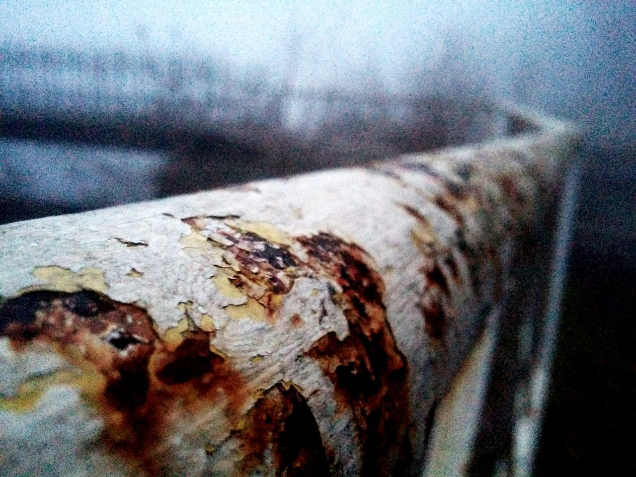 textured, close-up, no people, rusty, day, weathered, focus on foreground, outdoors, nature, tree trunk, animal themes