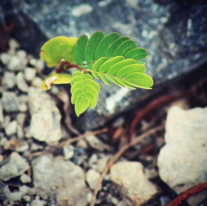 岩缝绿叶 Macro Plant Grass Tamron Taking Photos Enjoying Life Life 巧家 Travelling