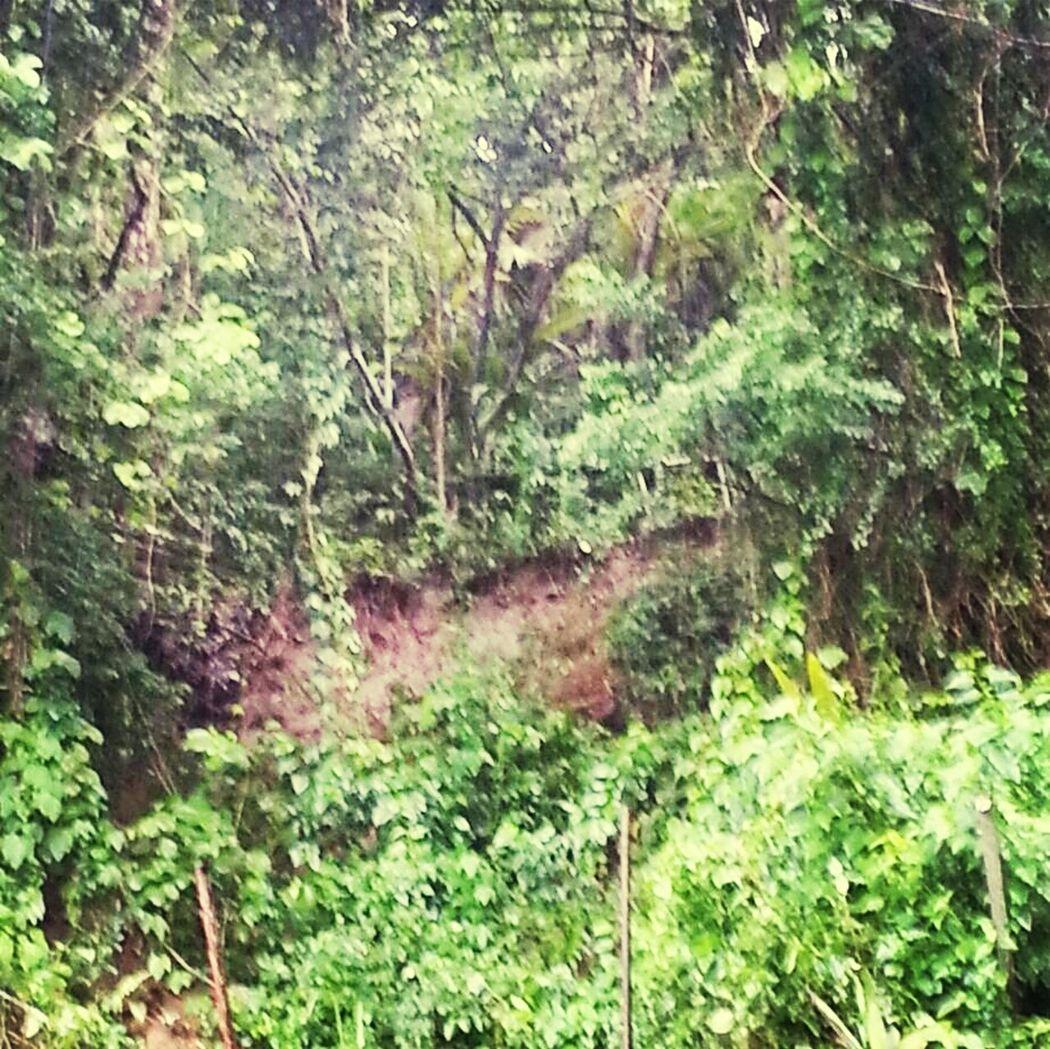 Deslizamiento de terreno Enjoying Life Check This Out In Gurabo Gurabo, Pr