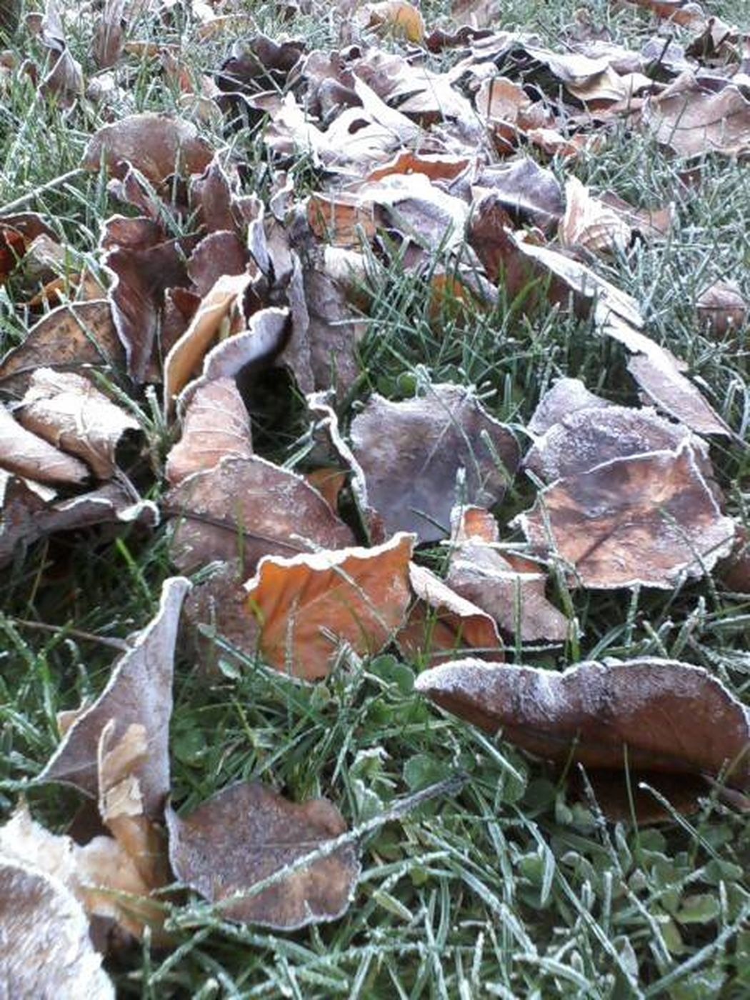 Autumn Beauty In Nature Close-up Cold Days Cold Temperature Fall Leaves Leaf Nature Outdoors The First Frost Weather