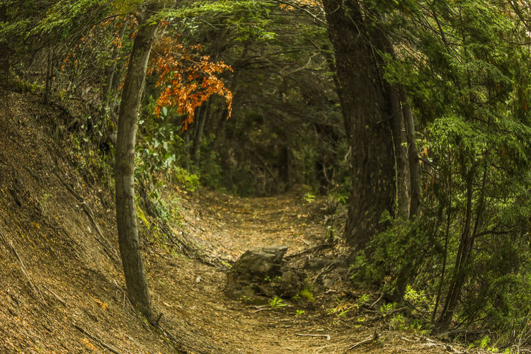 Autumn Beauty In Nature Branch Canonphotography Day Eyefish Forest Landscape Meliquina Nature No People Outdoors Senderismo Tranquility Tree Tunel