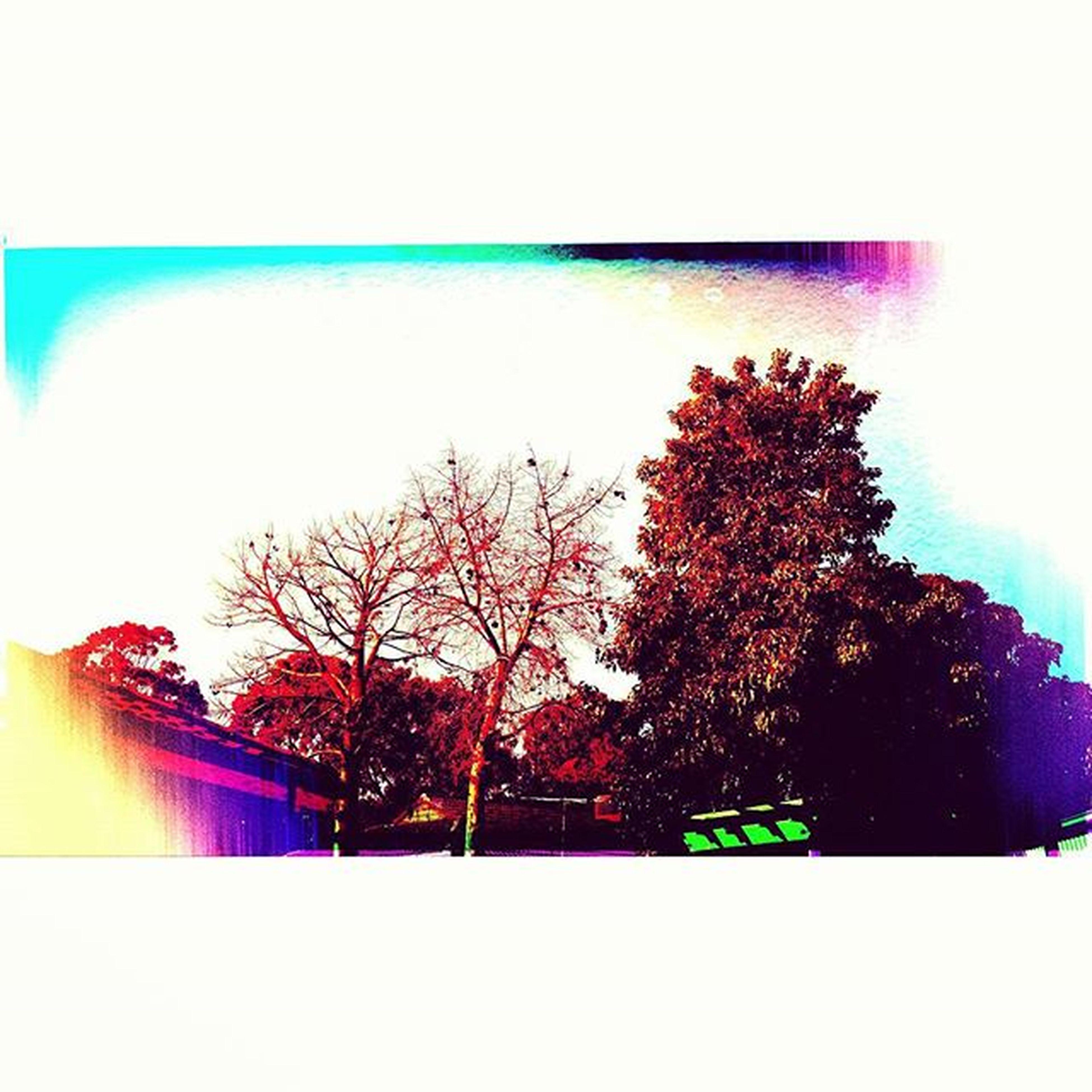 SunnySaturday Middleofwinter Adelaideburbs Colourful toonicetostayindoors lovesouthaustralia feelinggrateful luckygirl PicsArt