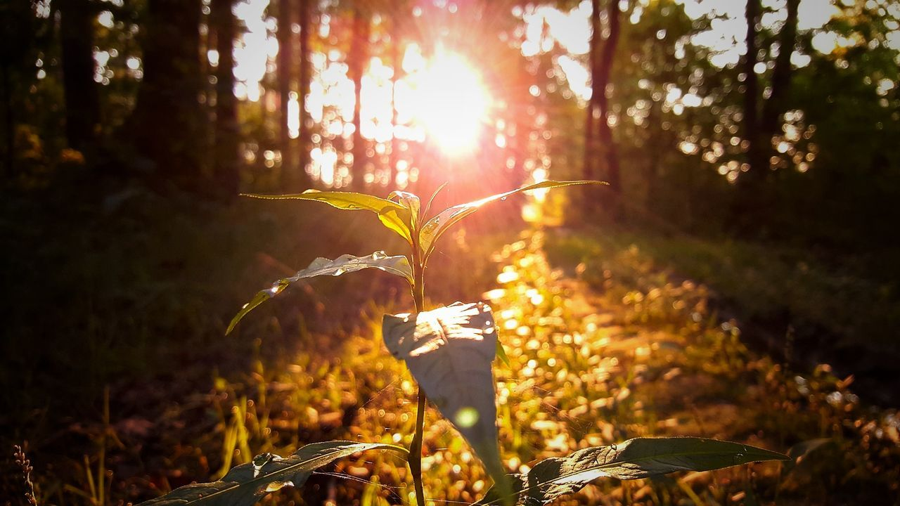 tree, lens flare, sunlight, nature, sun, no people, beauty in nature, growth, outdoors, sky, architecture, day