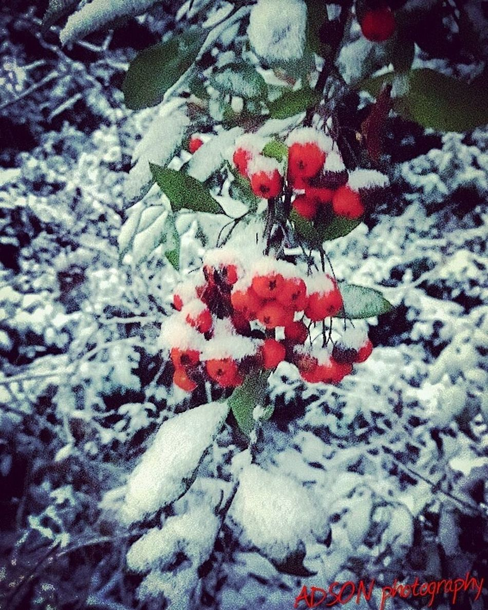 Winter ADSON....📷❤ ADSONphotography AMMAR ADSON City خريف Red Snow Nature Cold Temperature No People Winter Growth Large Group Of Objects Illuminated GutenNacht الثورة_مستمرة ثورة غرباء Guten Morgen Beauty In Nature Weather Close-up Outdoors Plant