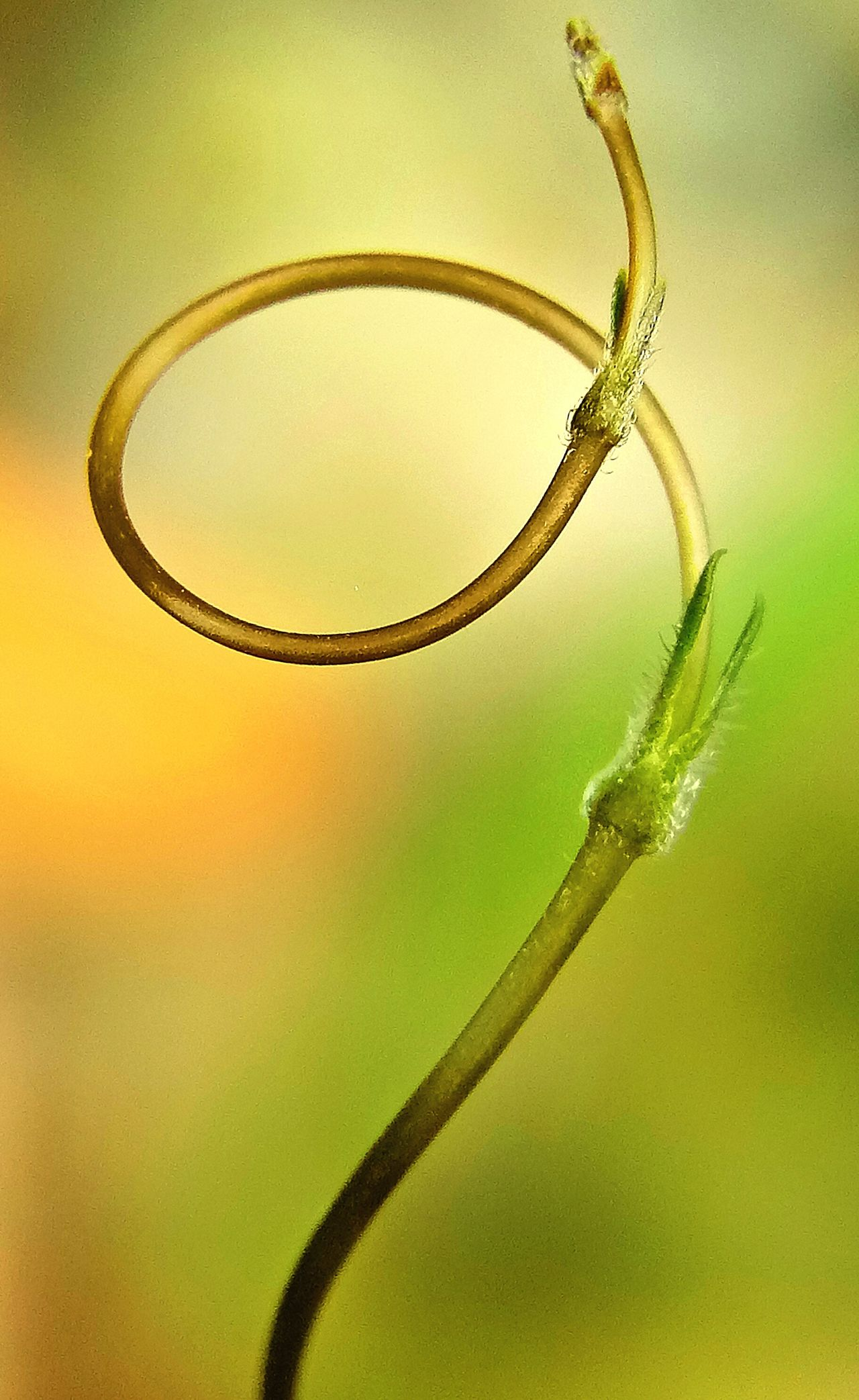 Growth nature,... Beauty In Nature Gold Colored Nature Tendril No People Outdoors Day Astrology Sign