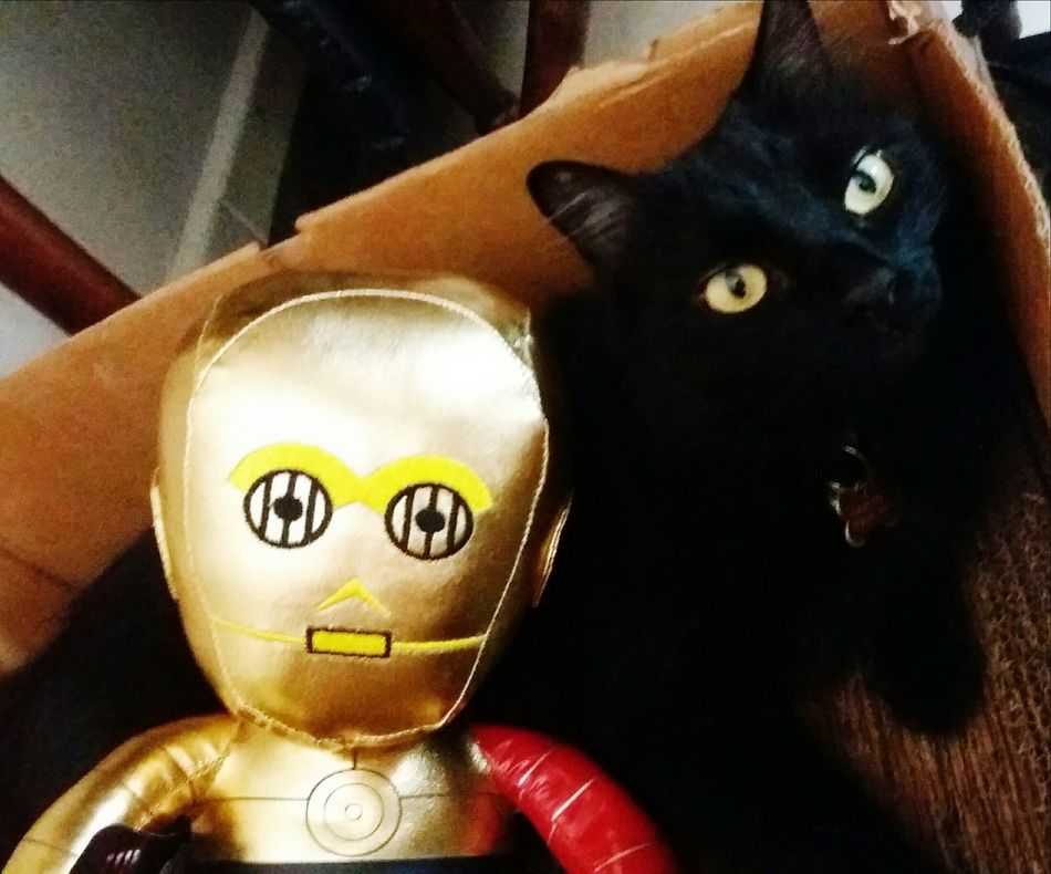 Animals Are Our Friends Pet Love Black Cats Lovers C3po Star Wars Bestfriends Simple Life Cats Of EyeEm Cat Lovers AdoptDontShop