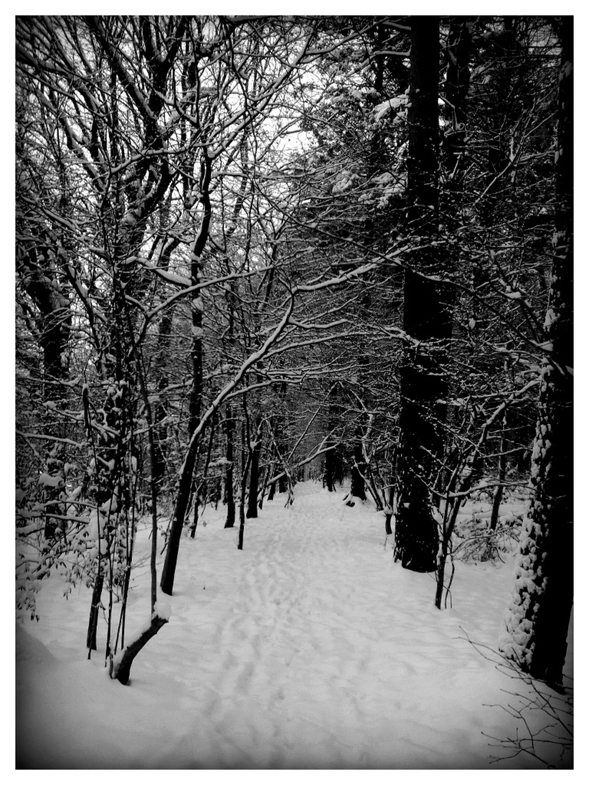 tree, transfer print, snow, forest, winter, tranquility, cold temperature, tranquil scene, season, auto post production filter, the way forward, nature, beauty in nature, branch, scenics, tree trunk, woodland, bare tree, growth, weather