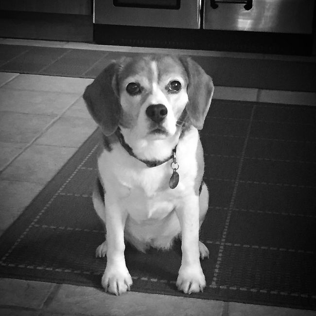 Food Arrival Imminent Dog Dogs Beautiful View Light And Shadow Mobilephotography EyeEm Nature Lover Blackandwhite Blackandwhite Photography Home Pets