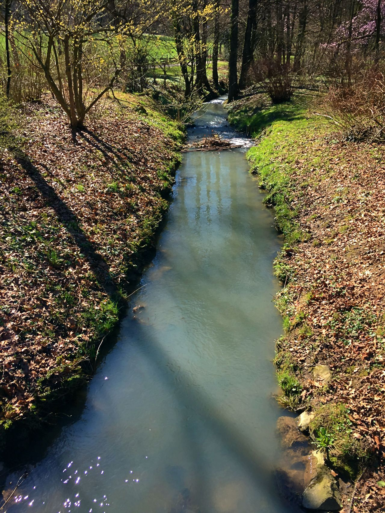 Autumn Beauty In Nature Day Forest Landscape Nature Nature Nature Collection Nature Photography Nature_collection Naturelover Naturelovers Naturephotography No People Outdoors River River Collection Riverscape Riverside Scenics Stream - Flowing Water Tranquil Scene Tranquility Tree Water