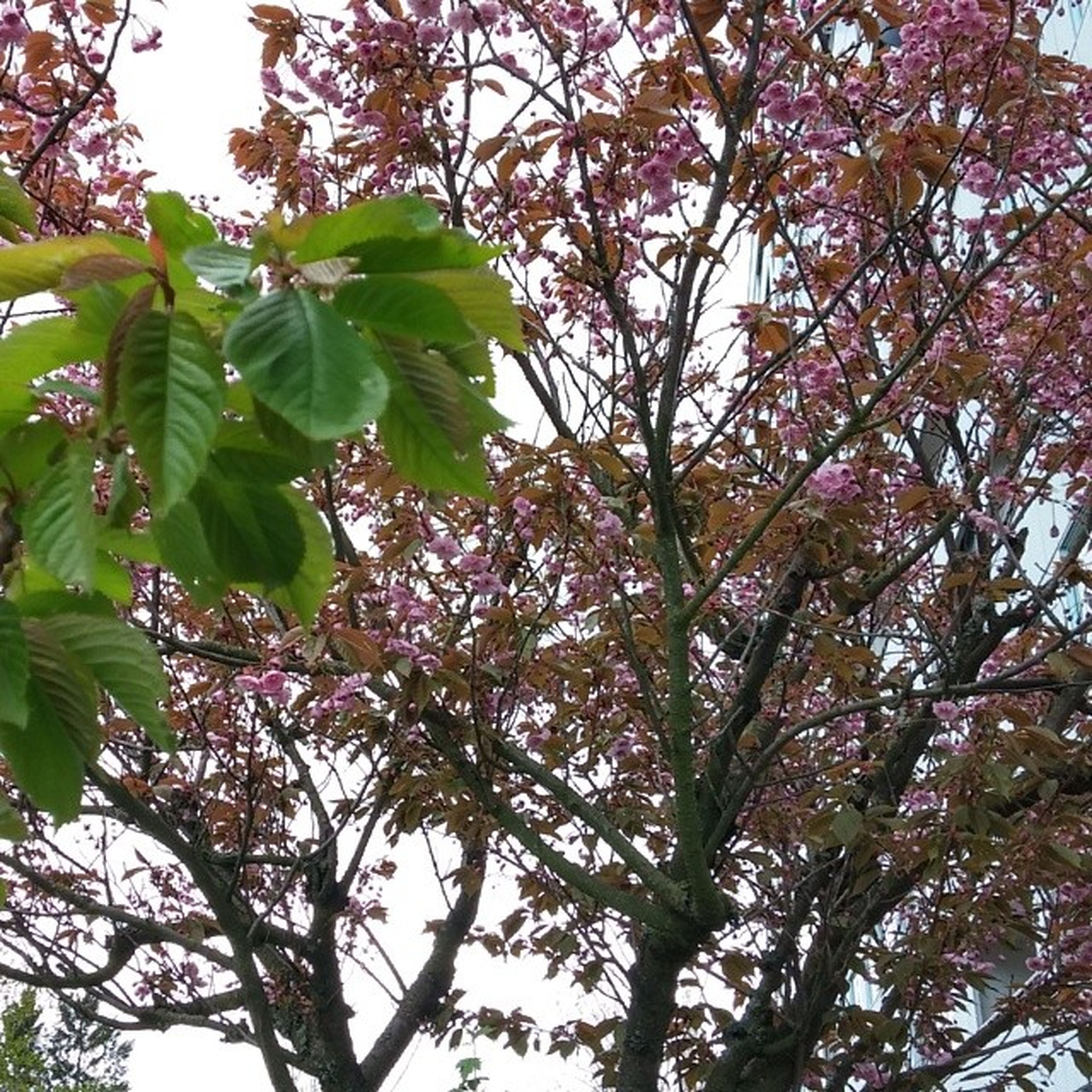 tree, growth, leaf, branch, low angle view, nature, beauty in nature, freshness, green color, close-up, sky, day, outdoors, tranquility, no people, flower, sunlight, plant, focus on foreground, fragility