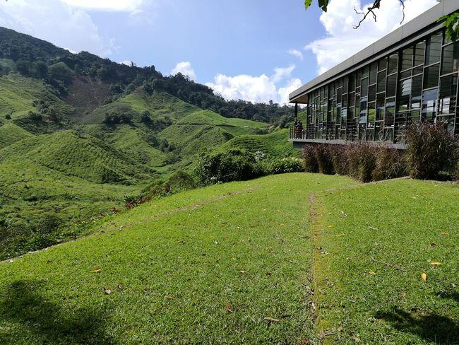 Tea Plantations Teatime Tea Terrace Nature Boh Tea Plantation Cameronhighlands Highlands