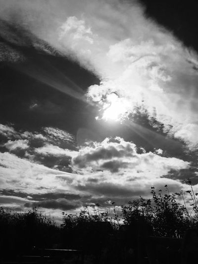 Scenics Tree Sky Tranquility Tranquil Scene Cloud - Sky Beauty In Nature Nature Cloud Day Solitude Non-urban Scene Growth Outdoors Majestic Sun Sunbeam Remote Cloudscape Cloudy