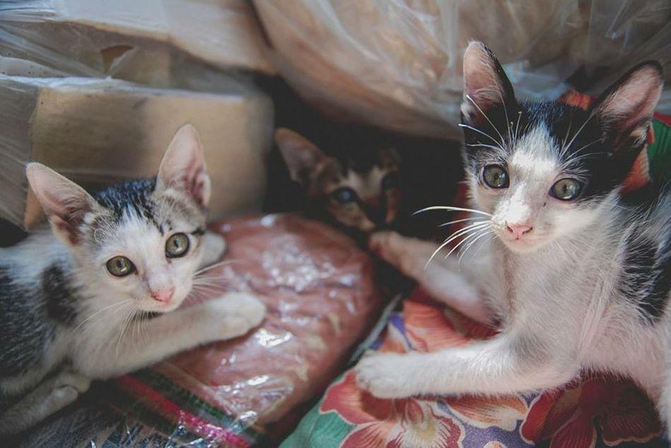 Cat Animals Thailand OpenEdit Enjoying Life Country Hello World ระหว่างทาง Family Moment