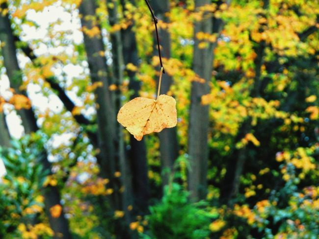 Nature Focus On Foreground Tree No People Outdoors Leaf Close-up Beauty In Nature Fragility Freshness Nature On Your Doorstep Nature Last Leaf On The Tree