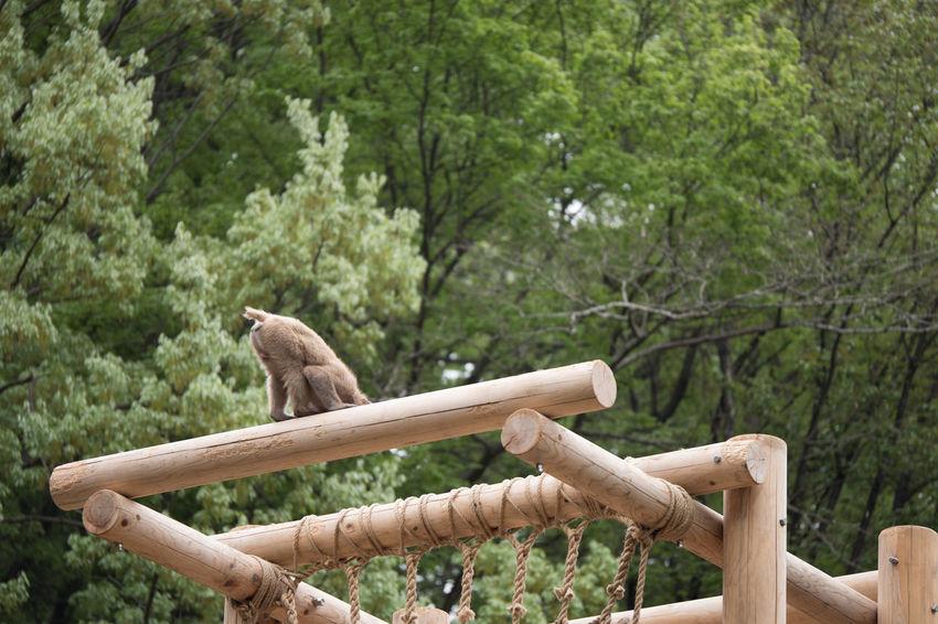 Animal Animal Themes Animals Contryside Day Macaca Mammal Monkey Nihon-zaru No People One Animal Outdoors Tree Zoo