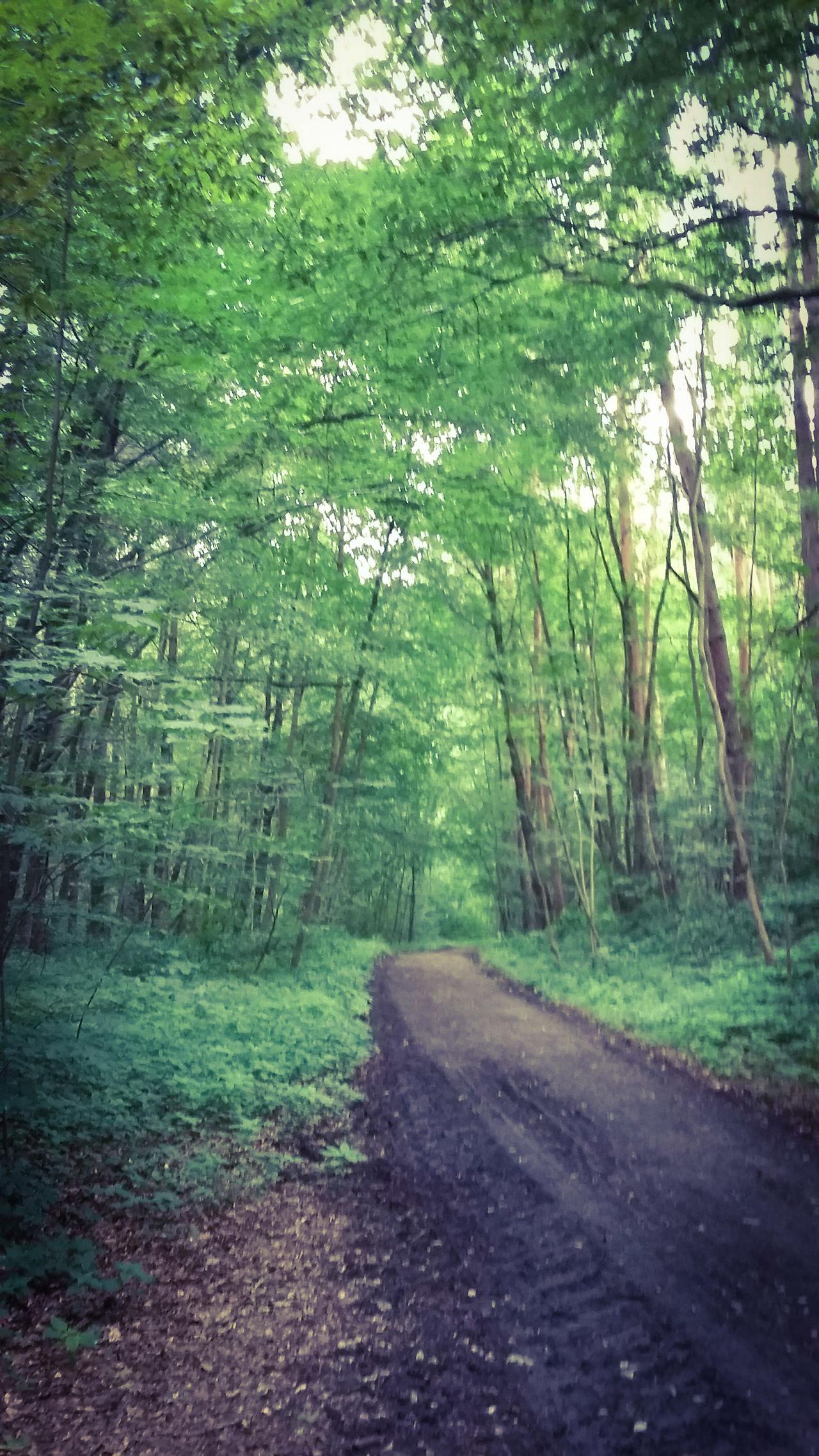 Sommer Pflanzenwelt Naturelovers Frankfurt Am Main Naturpur Waldspaziergang Frankfurter Stadtwald Nurianer Mystisch Verwunschene Pfade Www.trojan-prophezeiung.de