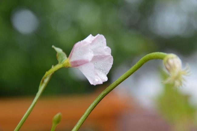 Tiny little florals under the grass