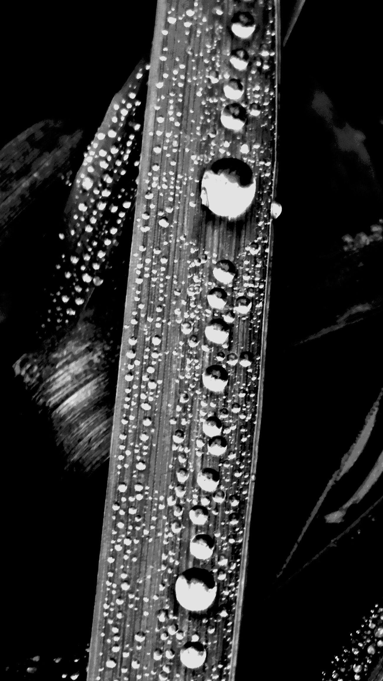 Blackandwhite Photography Blancoynegro Black And White Collection  Blackandwhitephoto Bw_collection Bw_lover BW_photography Bw_nature Bw_mania AMPt_Nature AMPt_community AMPt_Landscape AMPt - Still Life (Nature Morte)