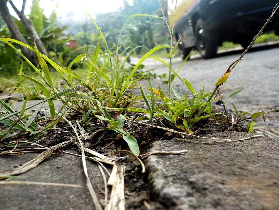Journey in indonesia...I see an Angkot Angkot INDONESIA Nature And Technology Transportation Grass Green Road Nature And Industry Feel The Journey