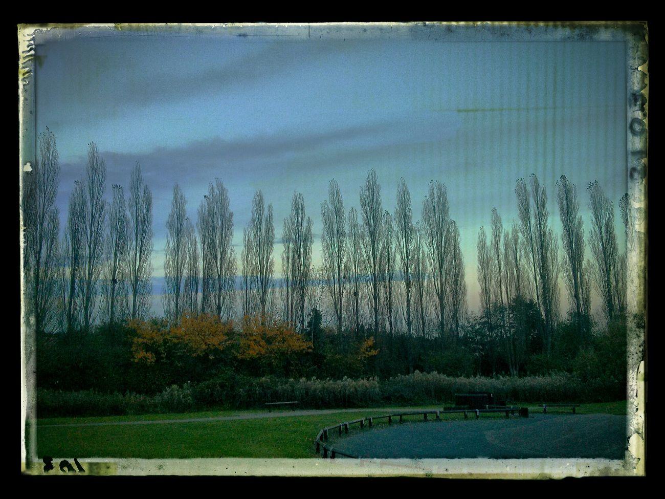 Sunset Sunset GUC Autumn Trees