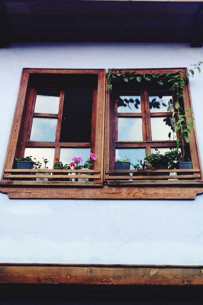 Bursa / Turkey Window Flowers Happiness Outdoors Bestshot Bestseller  Pencere Picoftheday Bestoftheday