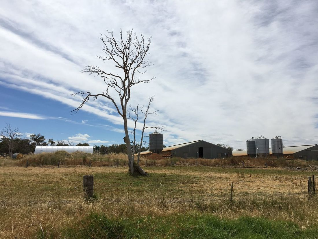 Agriculture Architecture Australia Bare Tree Built Structure Cloud - Sky Clouds Countryside Day Farm Farming Field Field Grass Growth Horizon Landscape Nature Nature Nature_collection No People Outdoors Silos Sky Tree