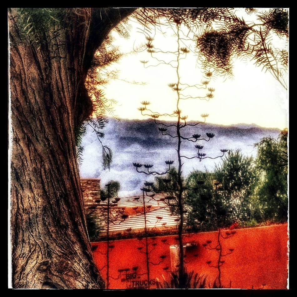 Palmill, La Quinta CA. Entrace sculpture by artist Joey Tyler LaQuintaCA Palmilla