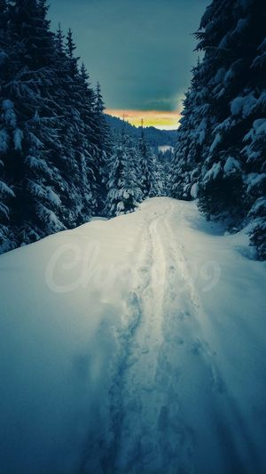 Winter Snow Cold Temperature Frozen Tree Outdoors No People Snowing Nature Scenics Day Sky Beauty In Nature Pixelated Sunset Cloud - Sky Sunset And Clouds  Vintage Photography Snow Covered Trees Romania Winter Snowcapped Mountain Snowy Mountains White Color Pines Forest