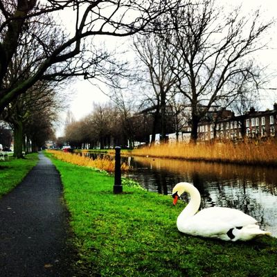 Walking around in Dublin by Caroline Killeen