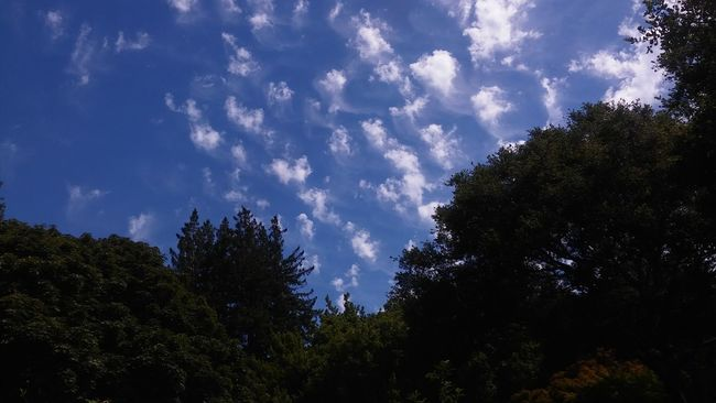 No Edit/no Filter Calisky Tree And Sky Santacruz Smartphonephotography Check This Out Norcal CaliLife Mid Day Sun And Clouds