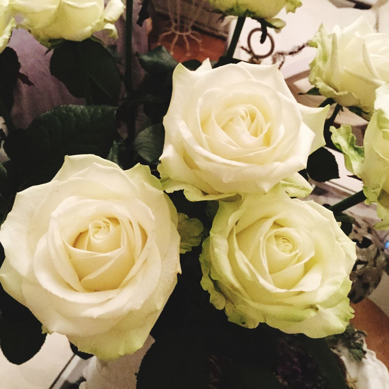 Rosen Weiße Rosen 🌾 Petal Freshness Flower Head Flower Rose - Flower Fragility Beauty In Nature Close-up Nature Rosé Yellow White High Angle View Bloom Single Flower White Roses Roses Eyeemflowerlover Eyeemroses Bouquet Springtime Blossom Softness