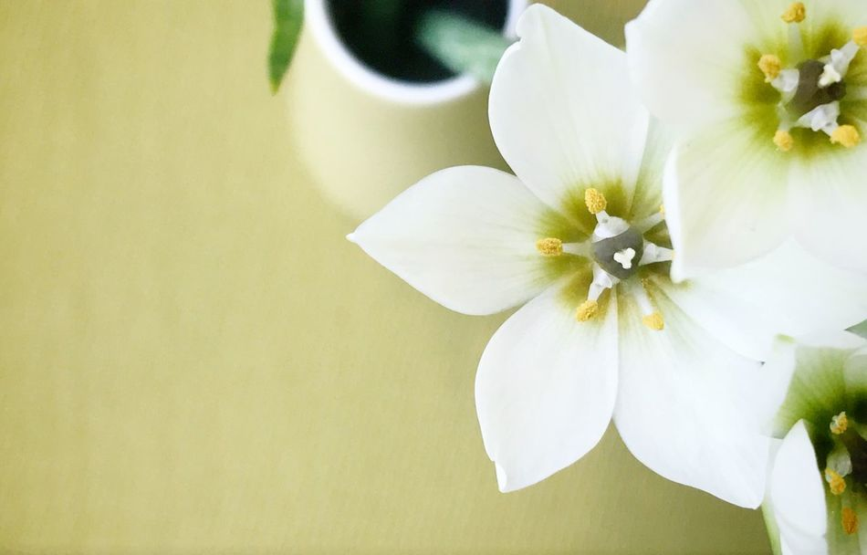 Flowers in a vase Flower Flower Head Fragility White Color Close-up No People Blossom Plant Copy Space Green Color High Angle View Directly Above