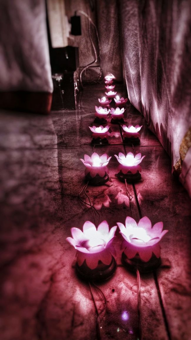 Flower Pink Color Petal Surface Level Pink Freshness Selective Focus Flower Head In Bloom Solitude Beauty In Nature Lighting EyeEm Travel Photography Illuminated Vibrant Color Shadow And Light Golu Navarathiri