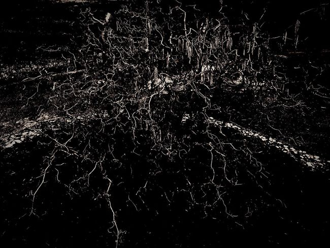 Devil Tree Death Abstract Dark Roots Branches Noleaf Scary No Visibility Haunting  Scary Photography Deep Nature Super Abstract Winter No Life Life EyeEm Eyeem Photography