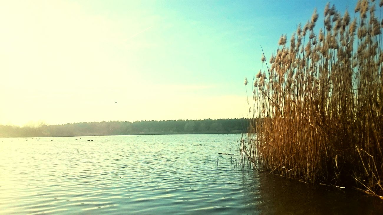 Today Polen Leszno Relaxing Zaborowo Lake