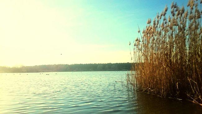 Today Polen Leszno Relaxing Zaborowo Lake