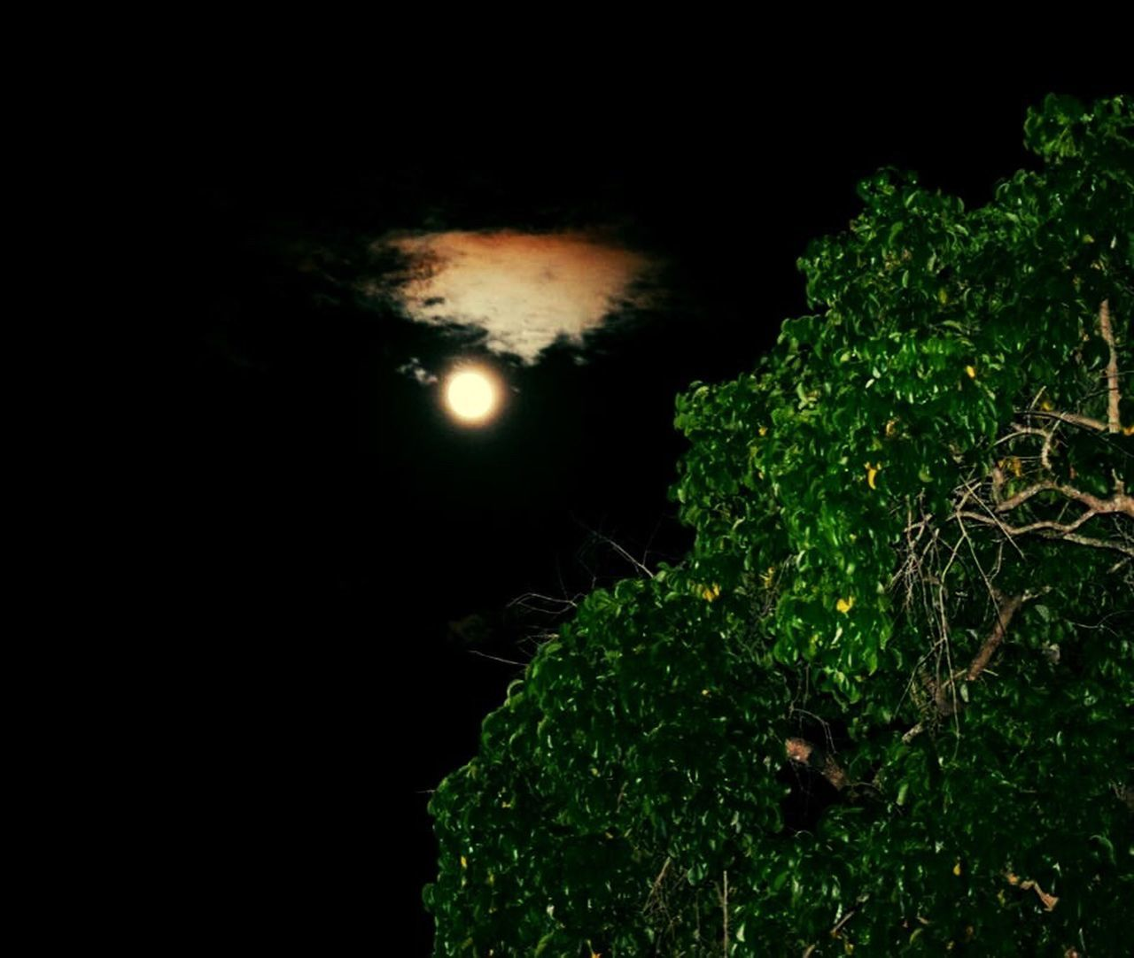 night, moon, beauty in nature, nature, no people, outdoors, astronomy, scenics, moonlight, tree, sky, close-up