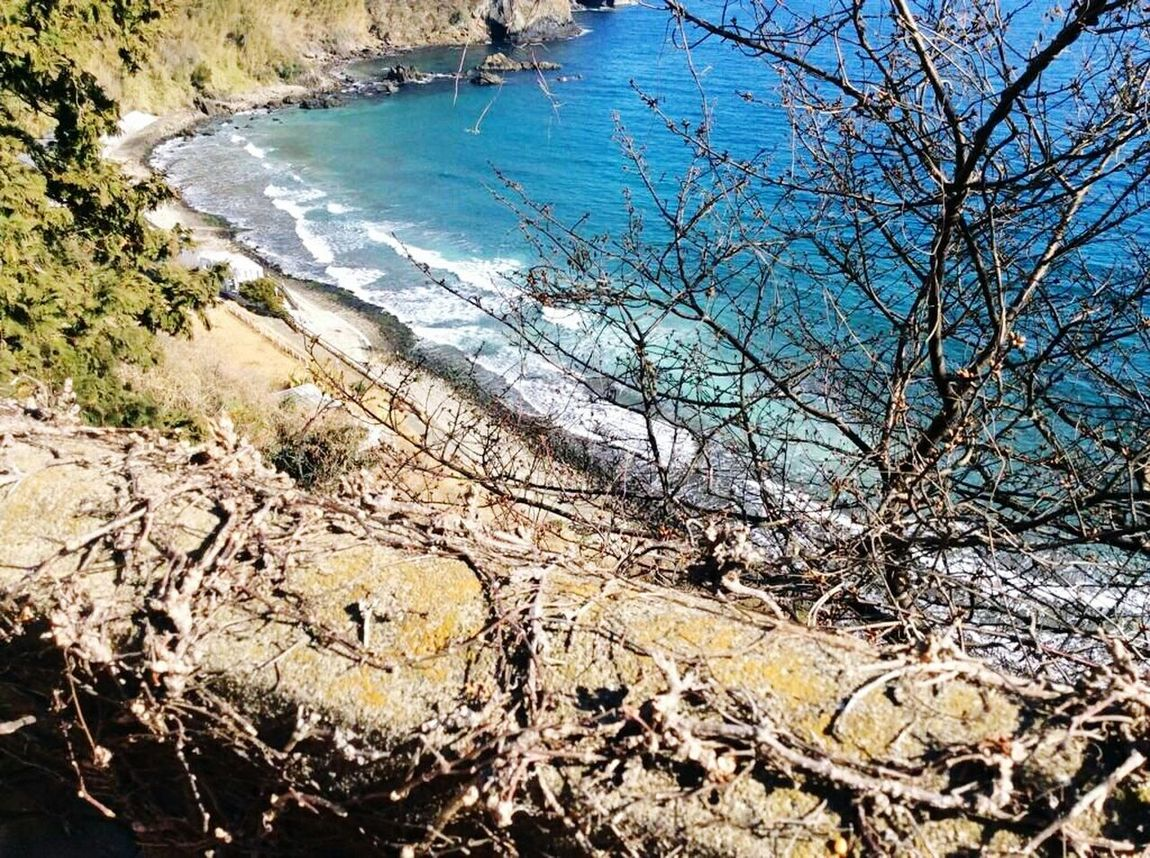 Sea And Trees Atami In Japan Branches Sea