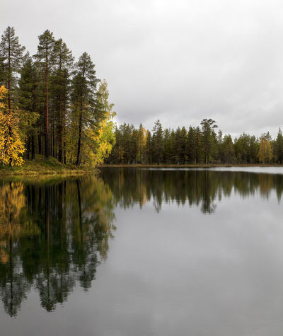 Atumn Colors Lapland Sweden Atumn Atumn Lake Atumn Sweden Beauty In Nature Day Forest Lake Nature No People Norrbotten Norrbotten Sweden Outdoors Peaceful Reflection Scenics Sky Tranquil Scene Tranquility Tree Water