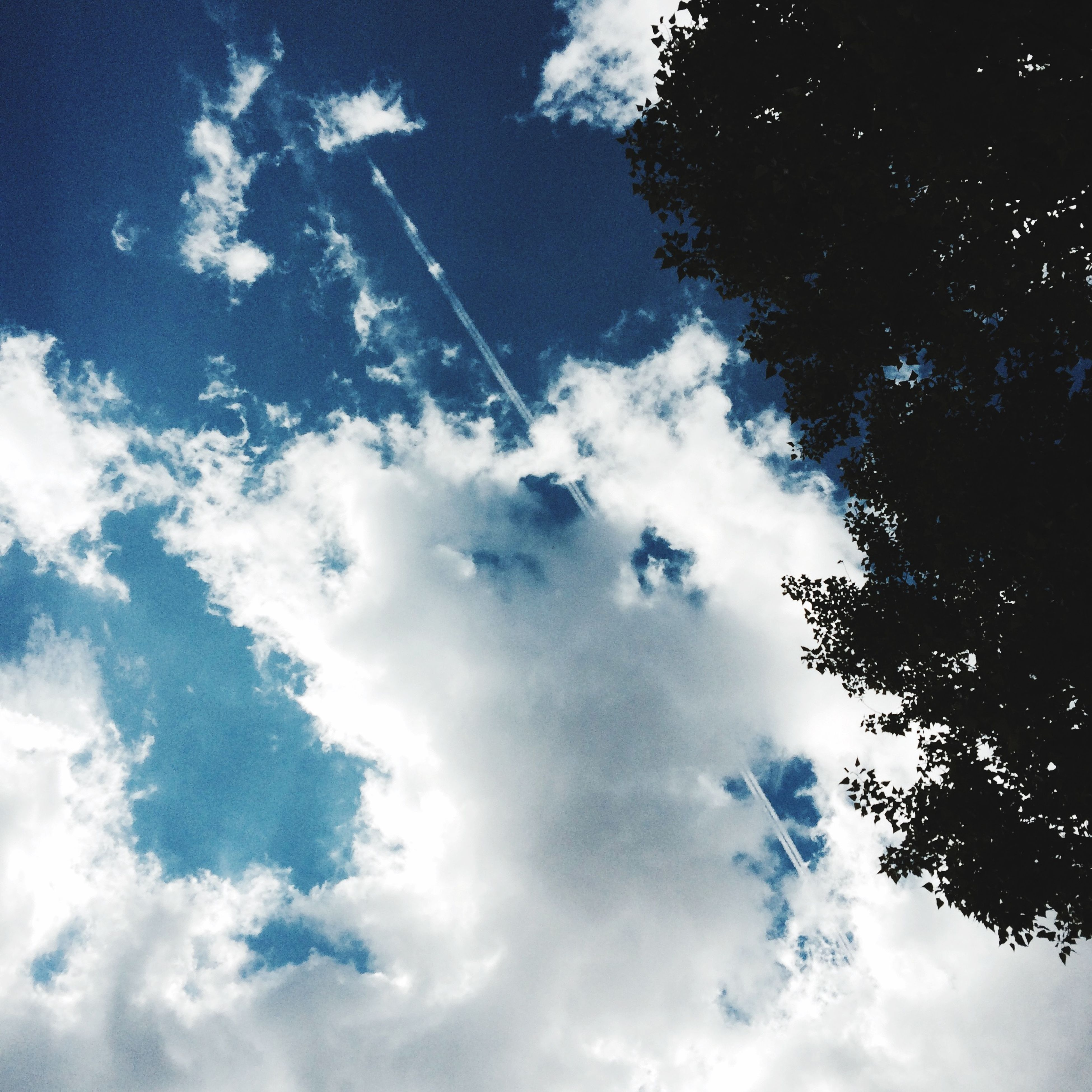 low angle view, sky, cloud - sky, tree, tranquility, beauty in nature, nature, scenics, blue, tranquil scene, cloudy, sky only, cloud, cloudscape, outdoors, day, idyllic, no people, backgrounds, silhouette