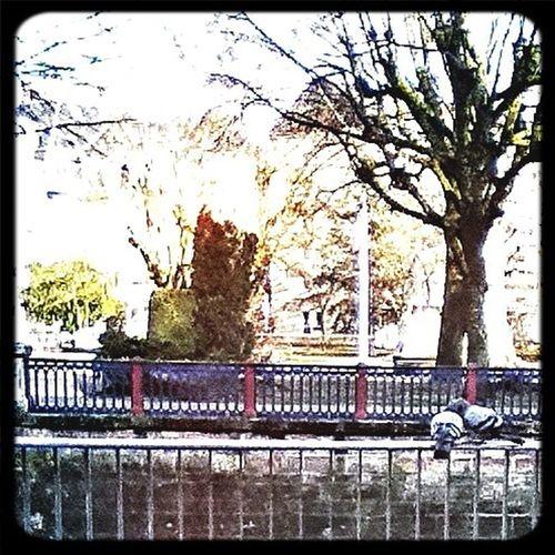 Love In Belfort