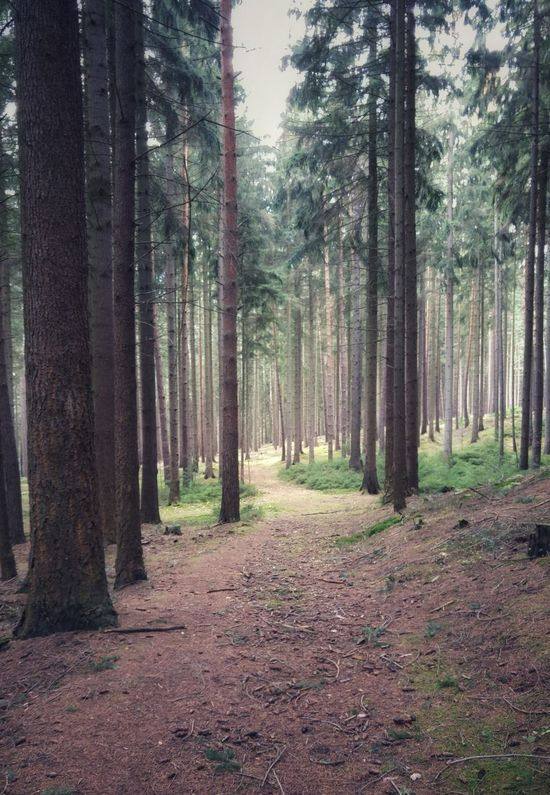 walk in German woodland WoodLand Beauty In Nature Day Forest Grass Growth Landscape Nature No People Outdoors Scenics Sky Thüringer Wald Tranquil Scene Tranquility Tree Tree Trunk Woodland Path Woodland Walk