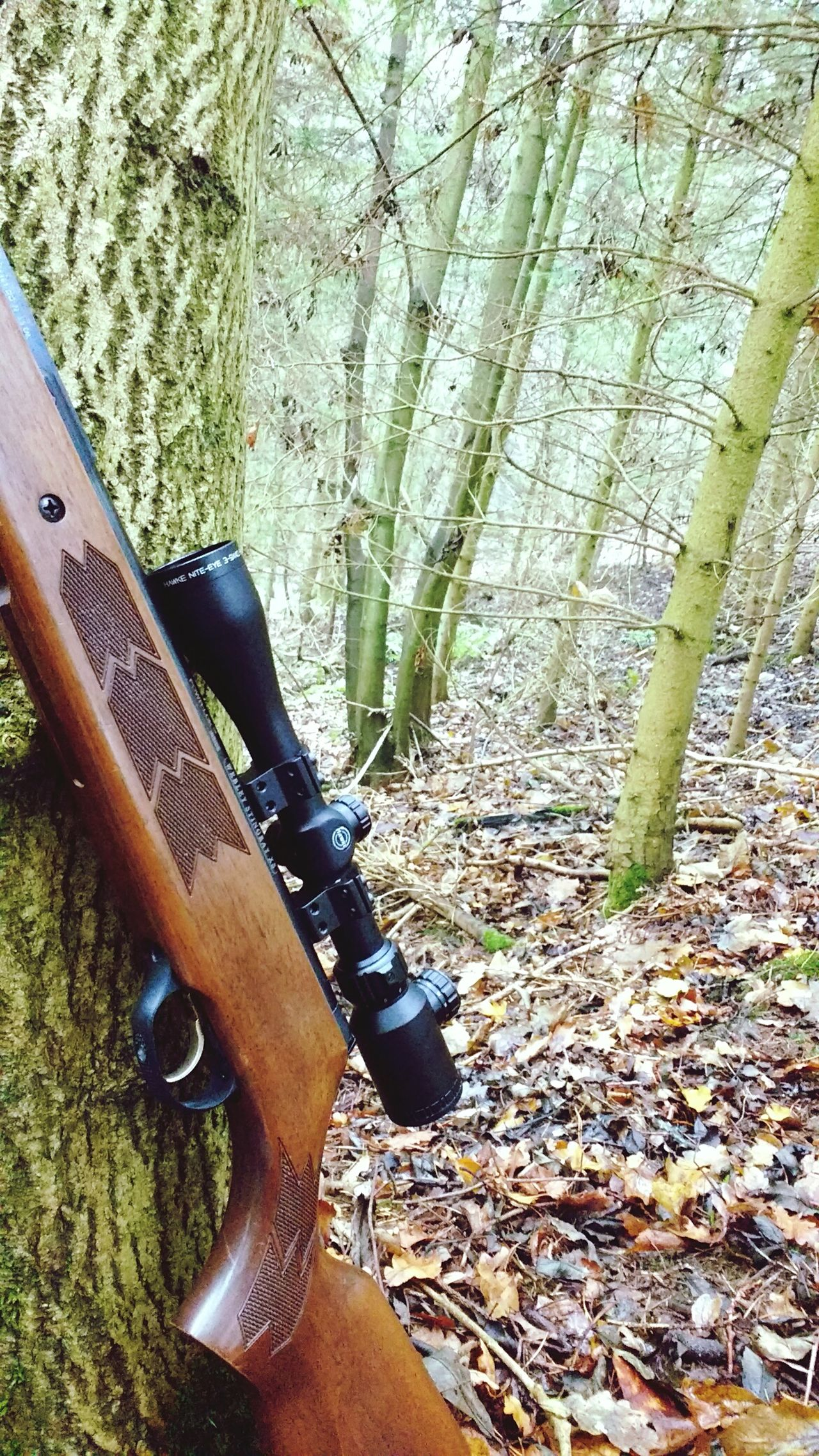 Rifle Airgun Forest Hunting Natural Forest Nature No People Rustic WoodLand Wood Moss Leaves Foraging Autumn